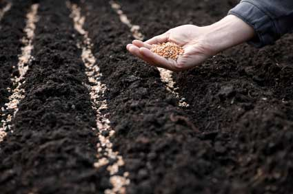 sowing-seeds1